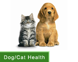 Healthcare - Dogs & Cats