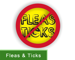 Flea & Tick